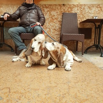 Dogs loving each other in Verona