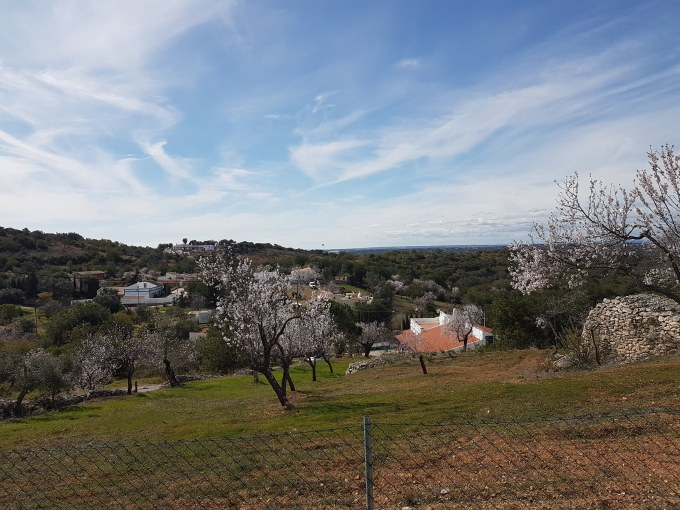 Almond trees February Algarve