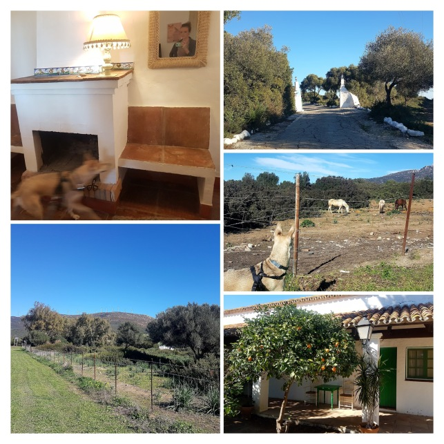 Cortijo afternoon