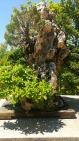 botanic 5